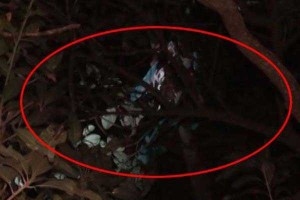 image_138033.tree_man_492032347